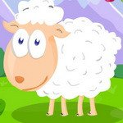Feed The Sheep