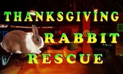 Thanksgiving Rabbit Rescue
